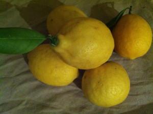 LemonsIMG_0090